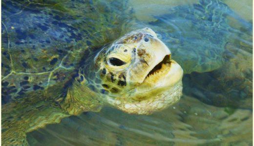 ウミガメが産卵時に涙を流す理由!感動的なワンシーンの真相!海の七不思議