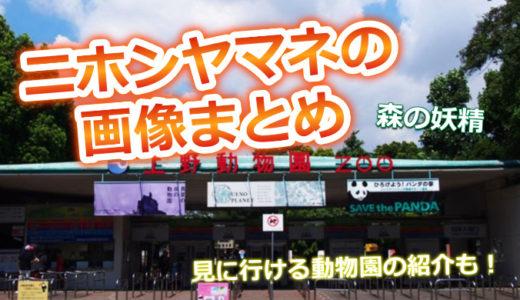 【画像】ニホンヤマネがかわいい!「森の妖精」飼育されてる動物園は?
