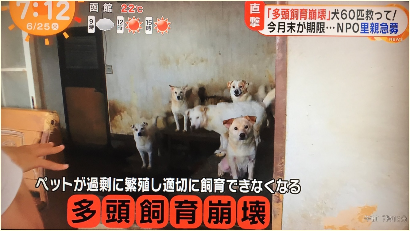 福岡,多頭飼育崩壊,飼い主,名前,顔画像,自宅,どこ,犬60匹,里親募集