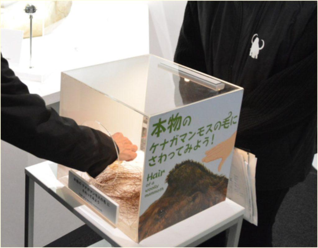 毛利衛,マンモスの毛,窃盗,画像,2千円説,2万円説