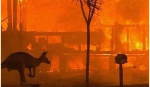 オーストラリア山火事の原因はユーカリの自然発火!現在の状況や募金先は?
