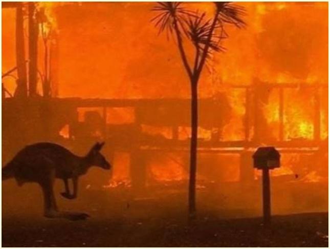 オーストラリア,山火事,原因,ユーカリ,自然発火,現在,状況,募金先